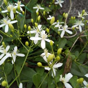 ひっそりと咲く野花