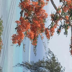 サイパン南の小島 行方…