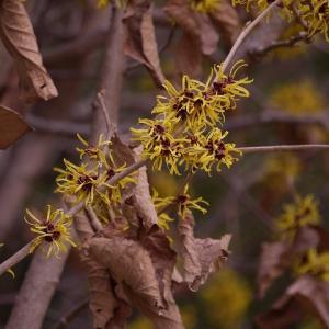葛西臨海公園の花と鳥