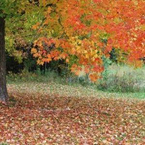 紅葉の季節に、写真狂となる夫