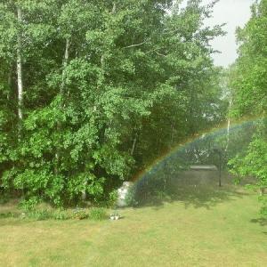 久しぶりの雨の後、庭に虹が生えていた