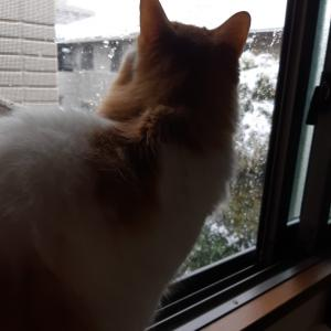 雪が降ったね