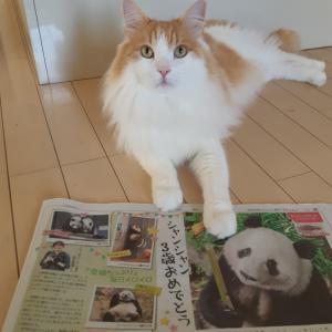 さんたと新聞しゃん