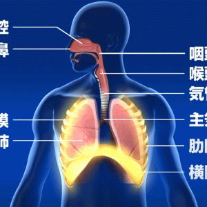 呼吸器系が弱い