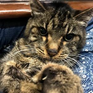 うちの猫年齢18歳ヨタヨタですが一生懸命頑張ってます。