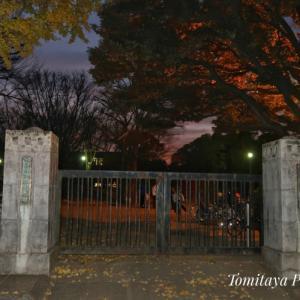 北浦和公園とマウンド