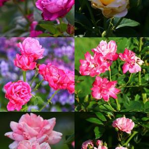 大津館の季節花