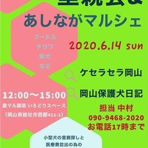 6/14(日)里親会&あしながマルシェ告知!