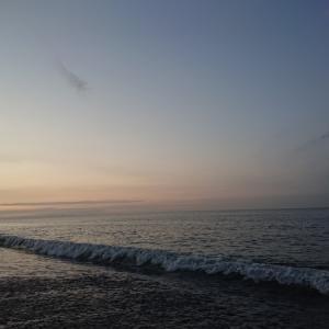 200802  真夏のコノシロと濁りの海