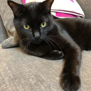 黒猫テンテン