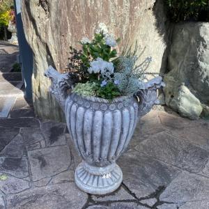 ヘブンリーブルーのビオラ、シクラメン、ストック…を使って寄せ植えを作りました!