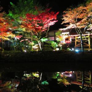 【紅葉ライトアップ】宝生寺の秋2019~ぶんごおおのカルタ絵札めぐり7~