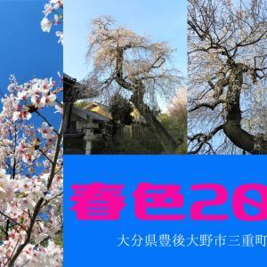 桜2020@大分県豊後大野市三重町&千歳町【#春は必ず来る】