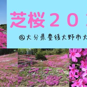 【エア花見】芝桜&ぼたん桜@大野町