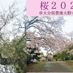 【花見】しだれ桜etc   2021@大分県豊後大野市千歳町