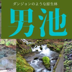【インスタ映え!?】男池と名水の滝@大分由布~ダンジョンのような原生林~