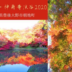【大分の紅葉】用作公園&神角寺渓谷2020@豊後大野市朝地町