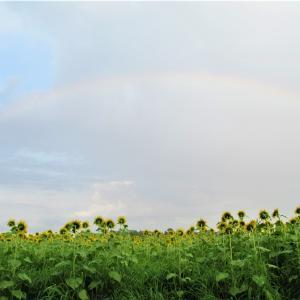 虹とひまわり@大分県豊後大野市