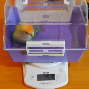 体重測定 (飼い主は除く・・・)