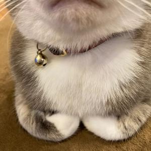 ニャンコの折り畳みの手