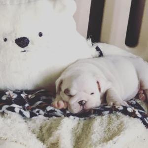 白熊さんに寝れた