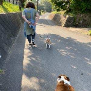 のんびり散歩、のんびり日向ぼっこ・・・