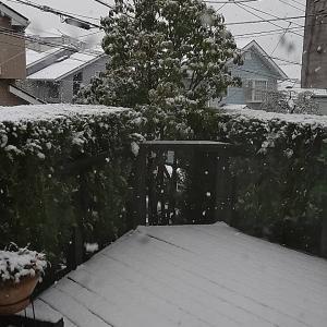 この時期に。。。。。雪
