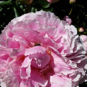 お花満開❣