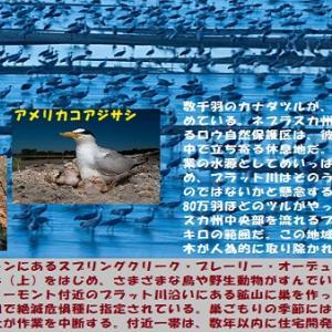 """""""動物たちの地球大移動"""" 地球と生きる/=004"""