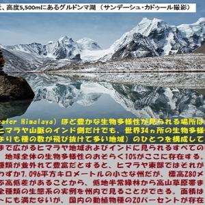 """""""豊かな生態系の小世界"""" 地球と生きる/=009="""