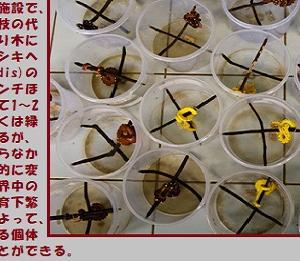 """""""売られる野生動物達(5/6)"""" 地球と生きる/=015="""