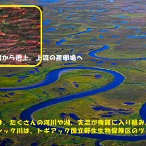 """""""アラスカの厳い選択(5/5)"""" 地球と生きる/=021="""