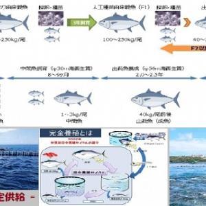"""""""魚が消えた海は… (2/6)"""" 地球と生きる/=027="""