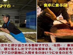 """""""魚が消えた海は… (3/6)"""" 地球と生きる/=028="""