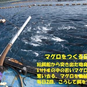 """""""魚が消えた海は… (5/6)"""" 地球と生きる/=030="""