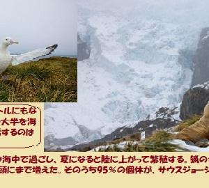 """""""蘇った生命の島… (3/3)"""" 地球と生きる/=061="""
