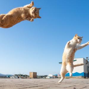 猫とウッチーには勝たれまい~惜別