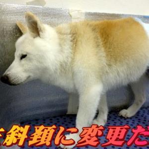 ☆10/17 休息って必要 老犬本舗☆