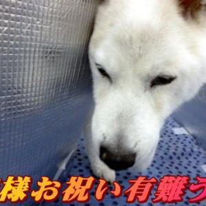 ☆10/19 御礼 老犬本舗☆