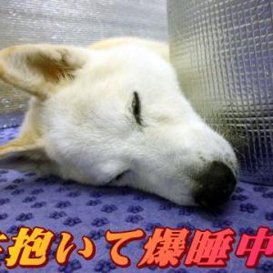 ☆11/14 入院しました。老犬本舗☆
