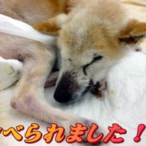 ☆11/22 食べ始めました!老犬本舗☆