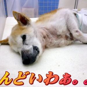 ☆12/12 体力落ちてきたね・・・老犬本舗☆