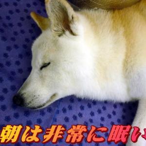 ☆1/18 雨の日眠い説!老犬本舗☆