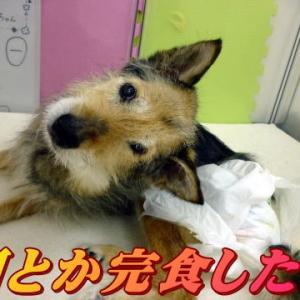 ☆1/23 時間差ご飯いかが?老犬本舗☆