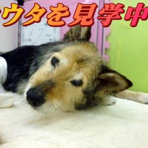 ☆2/26 試行錯誤の連続だね!老犬本舗☆