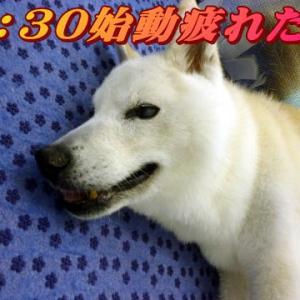 ☆2/28 何て元気な19歳!老犬本舗☆