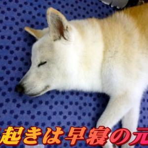 ☆2/29 2月最終日も皆元気!老犬本舗☆