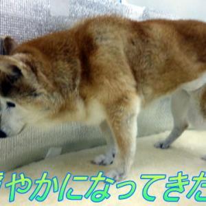 ☆3/29 穏やかになってきた!老犬本舗☆