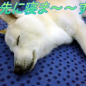 ☆4/2 まぁ朝から賑やかです!老犬本舗☆