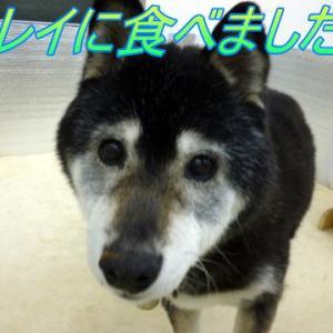 ☆4/3 すっかり慣れた様子!老犬本舗☆